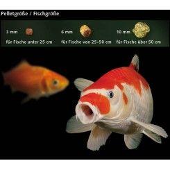Basis koi fiskefoder